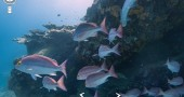 google-street-view-barrier-reef